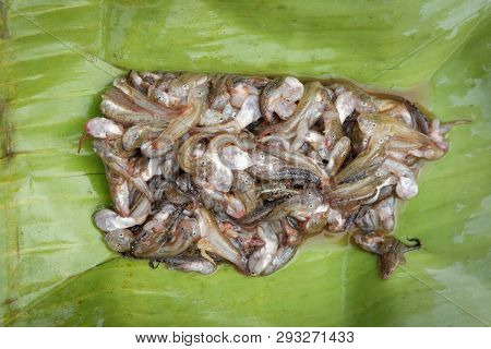 Frog Tadpoles Baby On Banana Leaf For Cook Food In Asian