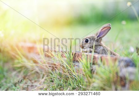 Cute Rabbit Sitting On Brick Wall And Green Field Spring Meadow / Easter Bunny Hunt For Festival On