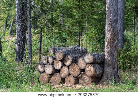Woodpile. Firewood Stacked In A Woodpile. Stock Of Firewood In The Forest.
