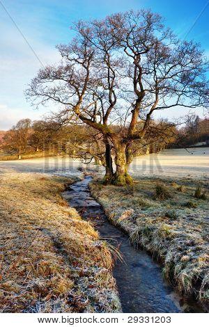 Bare Winter Tree Alongside Stream