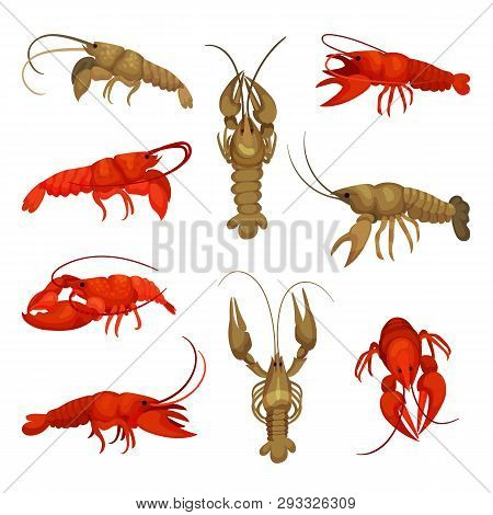 Lobster collection on white background. Crustacean concept. poster