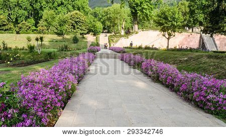 Back Yard Garden Stone Path Fence With Beautiful Autumn Flowers And Grass Growing Up Side Of Stone W