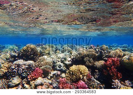 Coral Reef In Egypt As Ocean Background