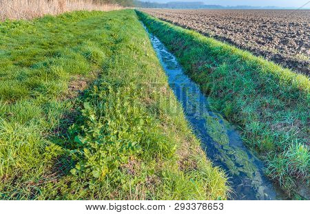 Duckweed On The Water Surfece Of A Dutch Polder Ditch Next To A Recently Plowed Field. It Is Springt