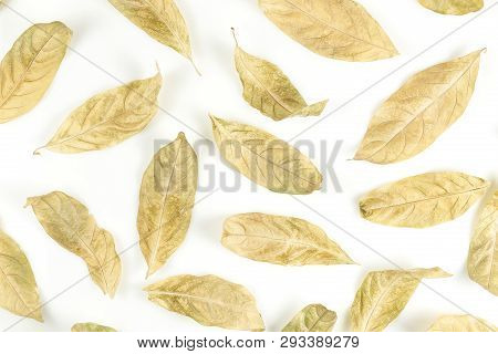 Dry Leaves On White Background, Abstract Composition