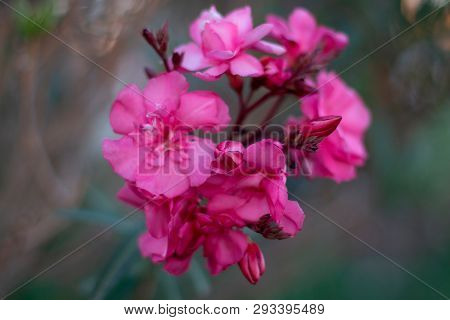 Close-up Of Eautiful Pink Flower With Blurred Background