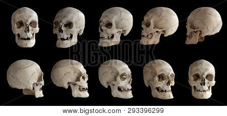 Human Anatomy. Human Skull. Collection Of Rotations Of The Skull. Skull At Different Angles. Isolate