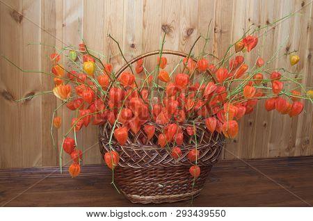 Сhinese Lanterns In A Basket. Bouquet Of Chinese Lanterns (physalis Alkekengi) In The Wicker Basket.