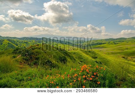 Poppies And Green Hills Line The Trails In Spring At Chino Hills Park