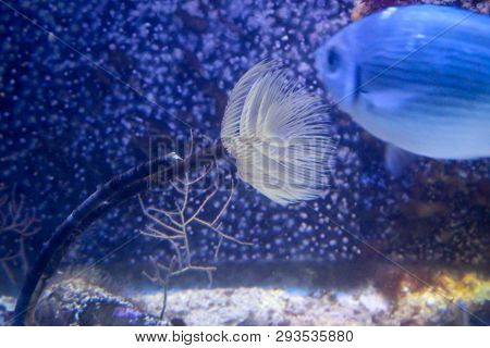 This Is A Close Up Of An Anemone And A Fish