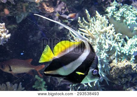 This Is A Close Up Of A Fish In The Reef