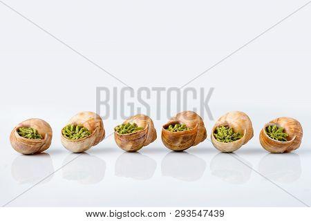 Large Escargots De Bourgogne Snails Baked With Garlic Butter On Light Background. Studio Shot With R