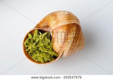Close Up Escargots De Bourgogne Snails Baked With Garlic Butter On Light Background. Studio Shot Wit