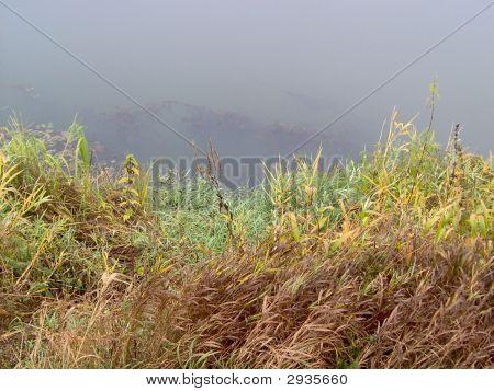 Gras auf dem Fluss auf der