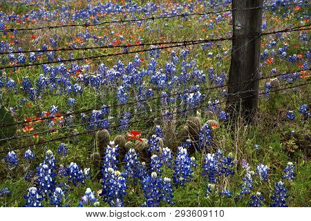 Spring Wildflowers At A Ranch In Texas