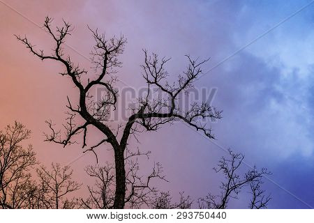 Mysterious Dramatic Landscape In Cold Tones - Silhouettes Of The Bare Tree Branches Against Color To