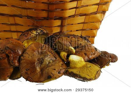 Freshly Collected Wild Mushrooms And Basket