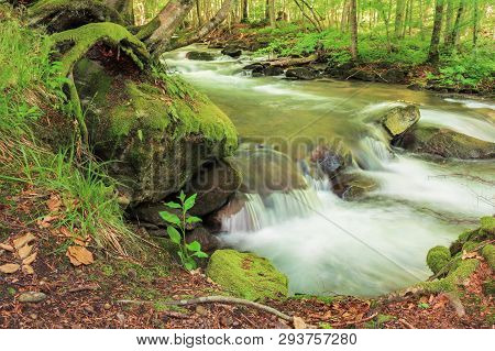 Bank Of The Forest River. Beautiful Summer Nature Scenery. Trees And Mossy Boulders On The Shore Of