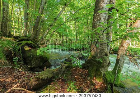 Bank Of The Forest River. Beautiful Summer Nature Scenery. Trees And Mossy Boulders On The Edge Of A