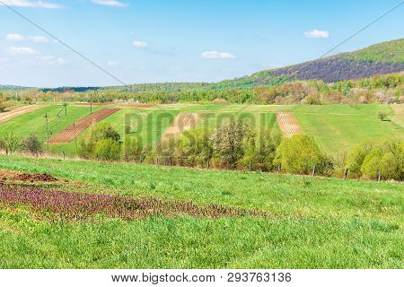 Mountainous Countryside In Springtime. Wonderful Sunny Weather. Rural Fields On Grassy Hills. Orchar