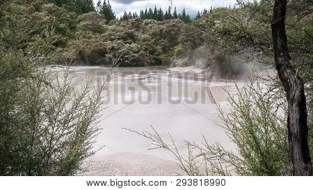 Boiling Mud Pool Framed By Bushes At Rotorua Nz