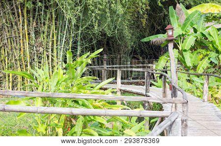 Wooden Path Way In Garden Morning Sunshine