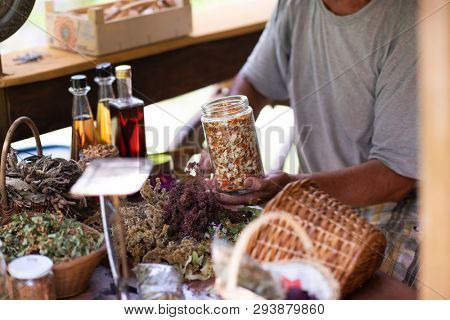 senior man gardener herbalist picking gathering fresh herbs for alternative medicine tea and poutting on balance