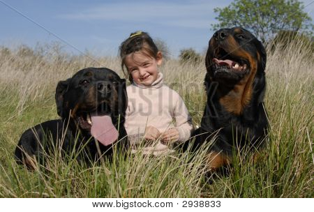 smiling little girl and two dangerous purebred rottweiler poster