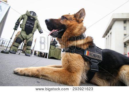 German Shepherd Army Image Photo Free Trial Bigstock