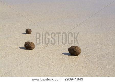Fiber Balls Of Seagrass