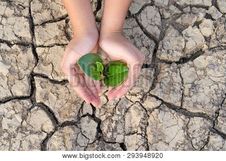 Hands Holding A Tree Growing On Cracked Ground, Save The World, Environmental Problems, Protect Natu
