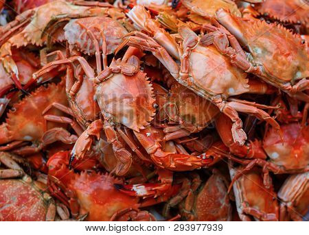 Boiled Crab Background. Boiled Stone Crab Body Builder. Cheliped Of The Crab