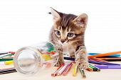 Tabby kitten on table with color pencils, isolated on white poster