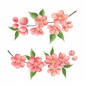 Sakura Blossom Painted Markers On White Background. You Can Use For Greeting Cards, Posters And Desi
