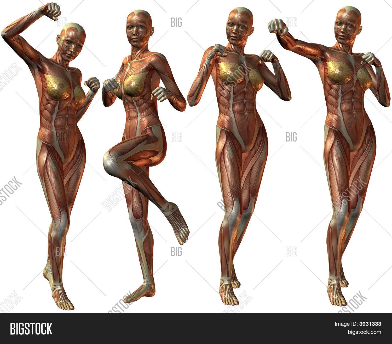 Female Human Body Image Photo Free Trial Bigstock