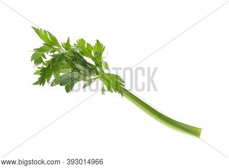 Fresh Green Celery Stem With Leaves Isolated On White