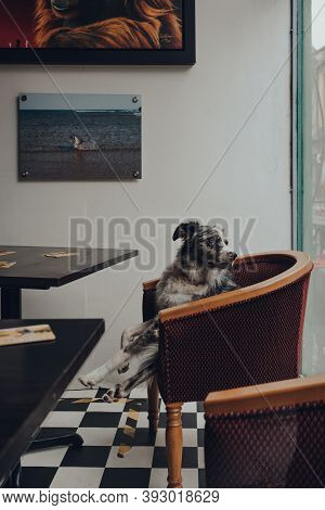 Frome, Uk - October 03, 2020: View Through Window Of A Dog On A Chair Inside A Pub In Frome, A Small