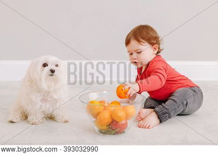 Cute Adorable Caucasian Baby Boy Eating Citrus Fruit. Finny Child Sitting On Floor With Pet Dog And
