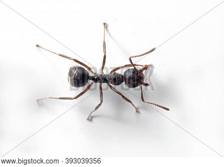 Macro Photography Of Black Ant On White Wall