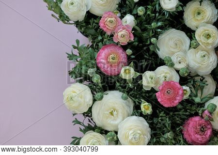 Ranunculus Flower.buttercup Flowers.white And Pink Ranunculus Flowers Set On Pink Background. Floral