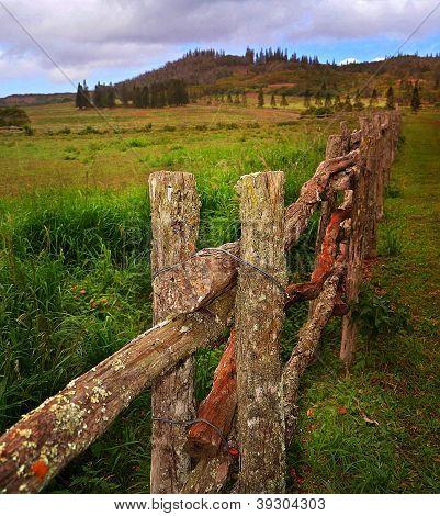 Lanai Countryside
