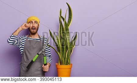 Dejected Upset Male Florist Busy Working, Wipes Tears, Looks At Snake Plant, Doesnt Want To Cut It,