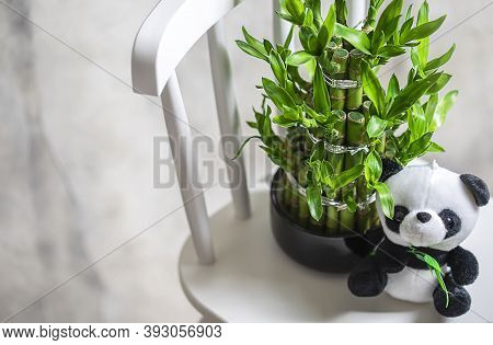 Plush Toy Panda, Green Bamboo Plant In A Pot On A White Chair. Small Plants In A Vase To Decorate Th