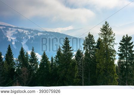 Spruce Forest On The Snow Covered Hill. Beautiful Winter Landscape In Mountains. Distant Ridge In Fo