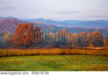 Gorgeous Countryside At Dawn In Autumn. Trees In Colorful Foliage On The Grassy Field. Mountains In