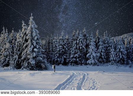 Majestic Landscape With Forest At Winter Night Time With Stars In The Sky. Scenery Background.