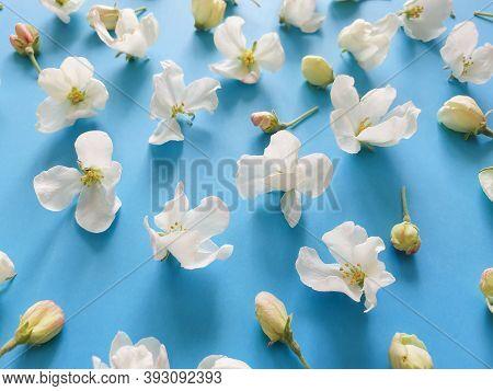 Apple Tree Flowers On A Bright Blue Background, Top View. Hi Key Spring Pattern. Dof On Sacura Flowe