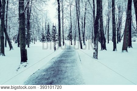Winter cloudy landscape, winter park alley in cloudy weather. Winter park scene, winter path covered with frost and snow, winter landscape. Cloudy winter nature view, winter scene with winter trees