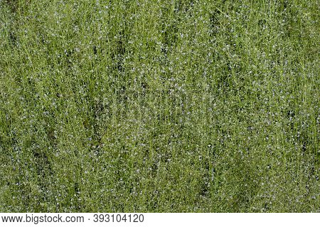 Small Green Grass During The Rainy Season In A Tropical Forest, Natural Background.