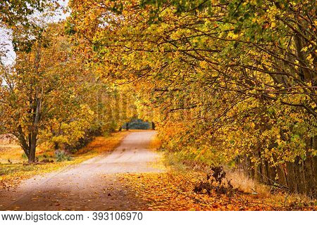 Dirt Country Sand Road, Lane With Trees In Autumn. Beautiful Nature Landscape. Fall Season